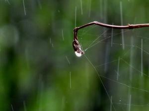 rain drops1
